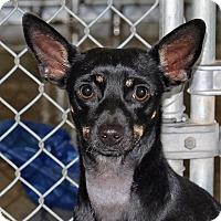 Adopt A Pet :: Alta - Spokane, WA