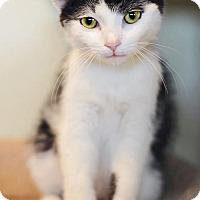 Adopt A Pet :: Skipper - Markham, ON