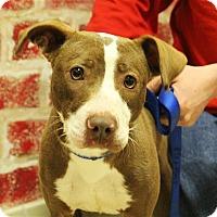 Adopt A Pet :: Gretchen - Elyria, OH
