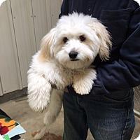 Adopt A Pet :: Brandon - Palmdale, CA