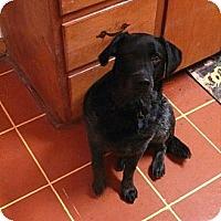 Adopt A Pet :: Shiloh - Chilhowie, VA