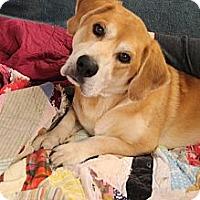 Adopt A Pet :: LEVI TOO - Homewood, AL