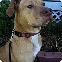 Pit Bull Terrier/Vizsla Mix Dog for adoption in Irmo, South Carolina - Brandy