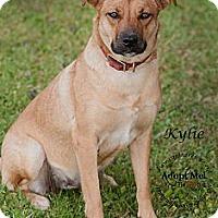 Adopt A Pet :: Kiley - Westfield, NY