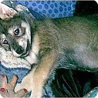 Adopt A Pet :: SIERRA - dewey, AZ