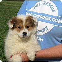 Adopt A Pet :: Truffles - Westbrook, CT