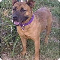 Adopt A Pet :: Alize (Allie) - Sacramento, CA