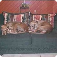 Adopt A Pet :: Romeo - Eustis, FL