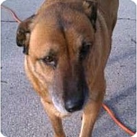 Adopt A Pet :: Maggie - Glenpool, OK