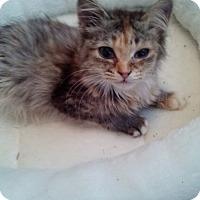 Adopt A Pet :: Sassette - Tarboro, NC