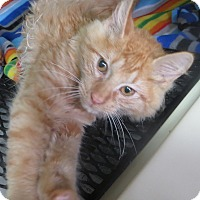Adopt A Pet :: Baxter - Brockton, MA