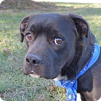 Adopt A Pet :: Weston - Mocksville, NC