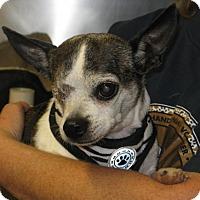 Adopt A Pet :: Edith - Richmond, VA