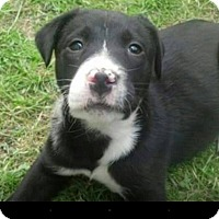 Adopt A Pet :: Ernie - Wappingers, NY