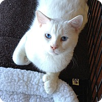 Adopt A Pet :: Frankie - Horsham, PA