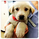 Adopt A Pet :: MOOSE **special needs read bio