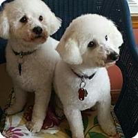 Adopt A Pet :: Bread and Butter - Beavercreek, OH