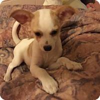Adopt A Pet :: Valerie - Lodi, CA