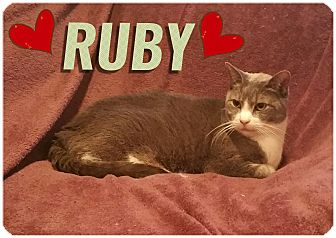 Domestic Shorthair Cat for adoption in Brooklyn, New York - Ruby