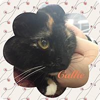 Adopt A Pet :: Cali - Leonardtown, MD