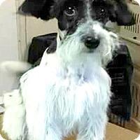 Adopt A Pet :: Liam-ADOPTION PENDING - Boulder, CO