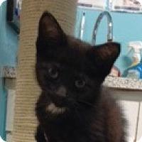 Adopt A Pet :: Darla - Toronto, ON