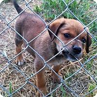 Adopt A Pet :: Jersey - Waller, TX