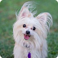 Adopt A Pet :: Ember - Scottsboro, AL
