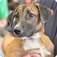 Adopt A Pet :: Tanner - Potomac, MD
