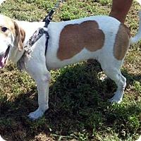Adopt A Pet :: Tucker - Sudbury, MA