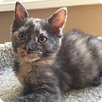 Adopt A Pet :: Bella - Herndon, VA