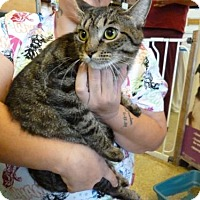 Adopt A Pet :: Sharlene (Merritt Island Center) - Cocoa, FL