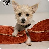 Adopt A Pet :: Nannette - Inglewood, CA