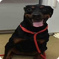 Adopt A Pet :: FELICIA - Easton, MD