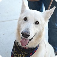 Adopt A Pet :: Kimber - Sunnyvale, CA