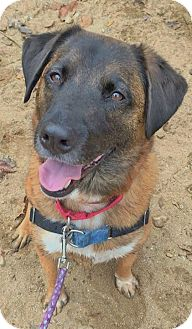 Australian Cattle Dog/Hound (Unknown Type) Mix Dog for adoption in Asheville, North Carolina - Mickey