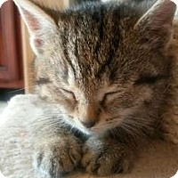 Adopt A Pet :: Mouse - Chester Springs, PA