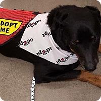 Adopt A Pet :: Rocky - Edgewater, NJ