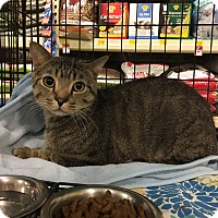 Adopt A Pet :: Hunter - Barrington Hills, IL