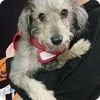 Adopt A Pet :: Murphy - Fresno CA, CA