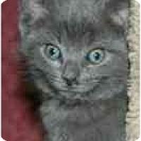 Adopt A Pet :: Chelsea - Arlington, VA
