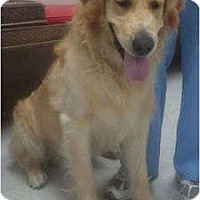 Adopt A Pet :: Buddy - Lake Forest, CA