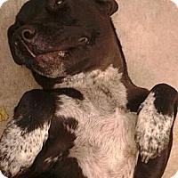 Adopt A Pet :: Iris URGENT - San Diego, CA
