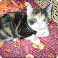 Adopt A Pet :: little girls - Etobicoke, ON
