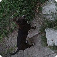 Adopt A Pet :: Luis - Orlando, FL