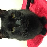 Adopt A Pet :: Waldo - Gilbert, AZ
