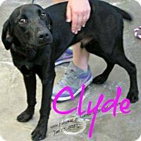 Adopt A Pet :: Bonnie & Clyde - Scottsdale, AZ