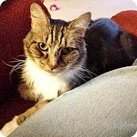 Adopt A Pet :: Samson - Oakland, CA