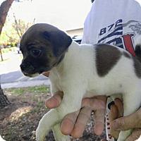 Adopt A Pet :: Moira - Lodi, CA