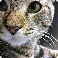 Adopt A Pet :: Cole - Philadelphia, PA